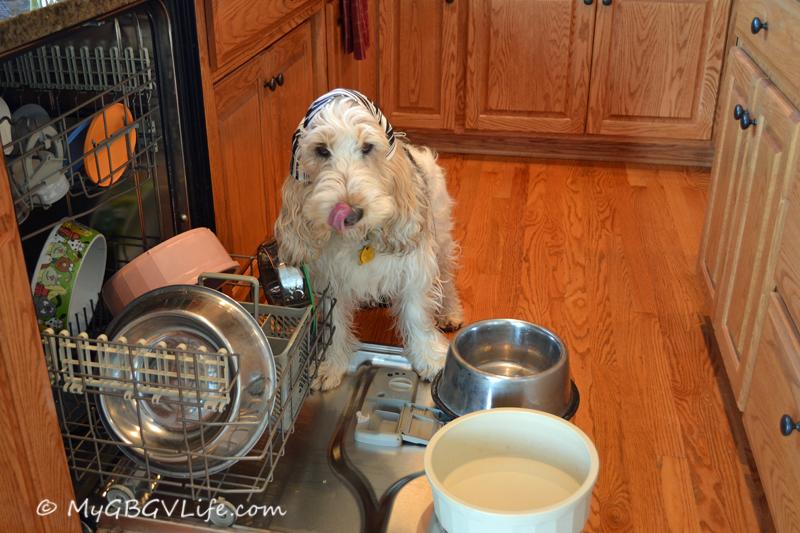 Doing dishwasher loading and pre-washing!