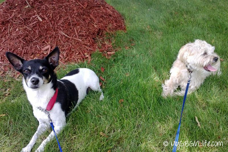 Buddy and Jetta