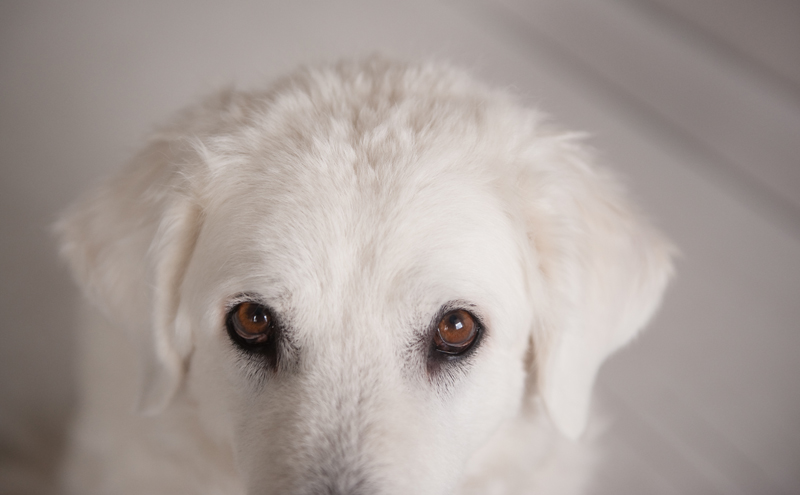Who are you daring to call a senior dog?