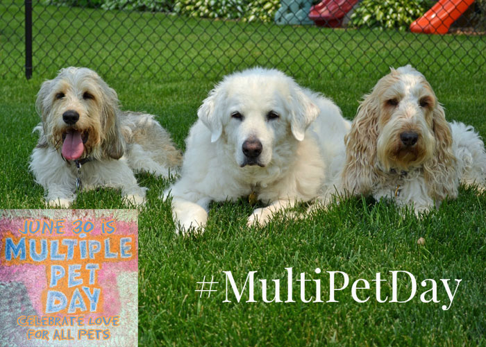 Multiple Pet Day #MultiPetDay