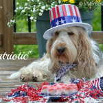 My GBGV Life have a patriotic 4th of July