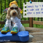 My GBGV Life tips to calm your dog