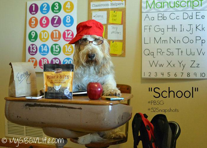 Back To Dog School My Gbgv Life
