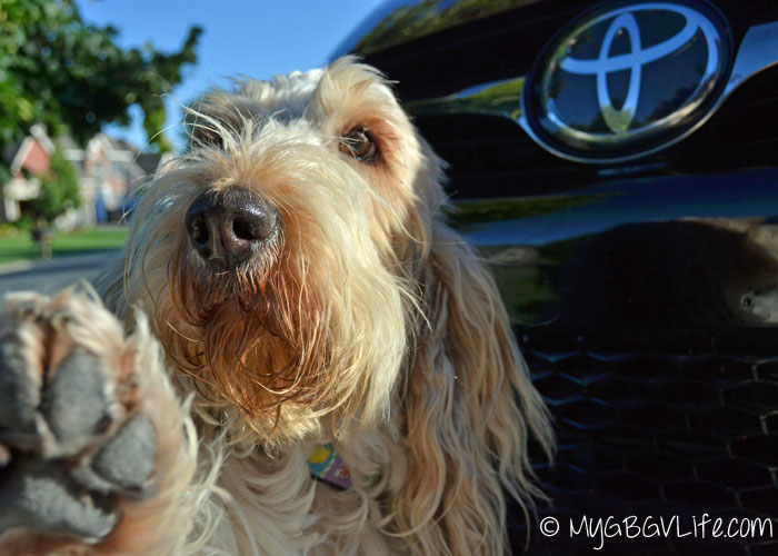 Toyota Camry XSE – Sporty, Practical, and Dog Friendly #DriveToyota