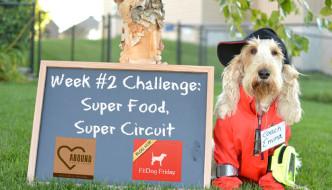 Super Food, Super Circuit – Fall Fitness Challenge Week 2 #FallFitDog