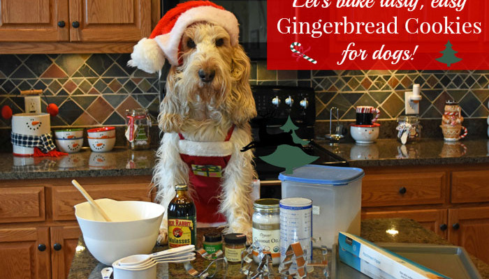 My GBGV Life Baking Gingerbread cookies for dogs