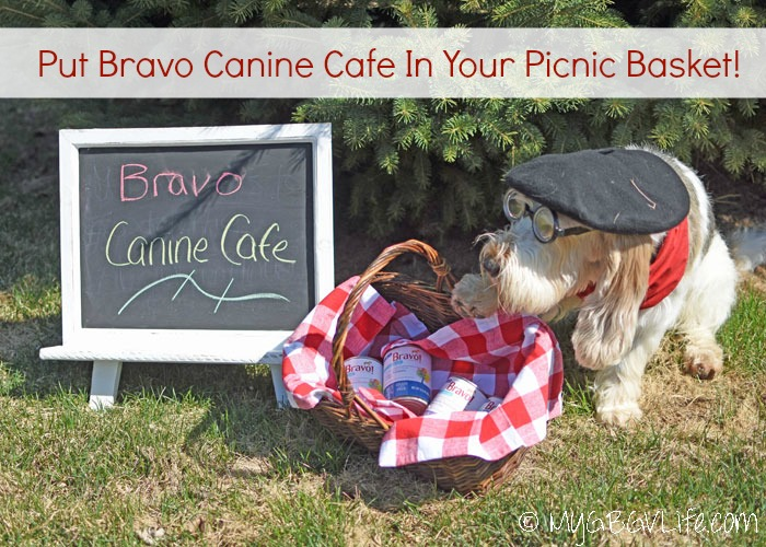 Fill Your Picnic Basket with Bravo Canine Cafe