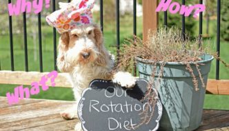 What Is A Rotation Diet And Why Are We On One?