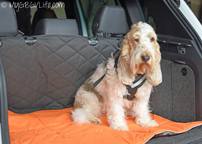9 Reasons To Love A Dog Comforter From Territory My Gbgv
