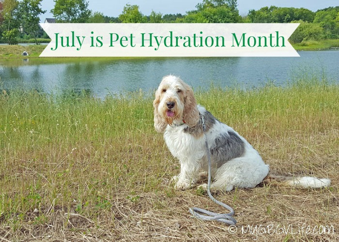 July Is Pet Hydration Month – Is Your Pet Hydrated?