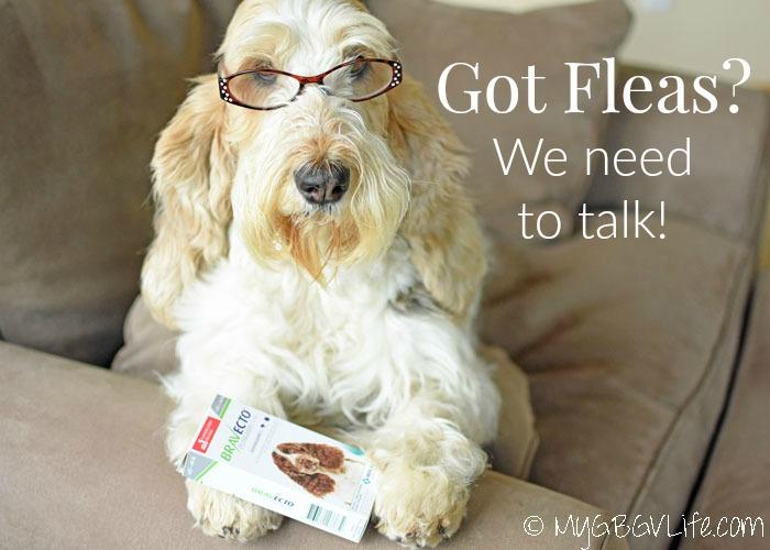 Dog Got Fleas? We Need To Talk! #12Bravecto