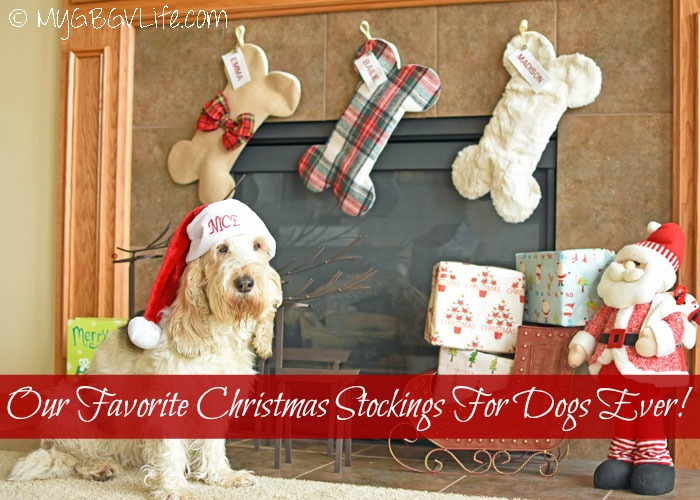 Our Favorite Christmas Stockings For Dogs Ever!