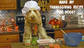 Chef Emma's All In One Thanksgiving Recipe For Dogs