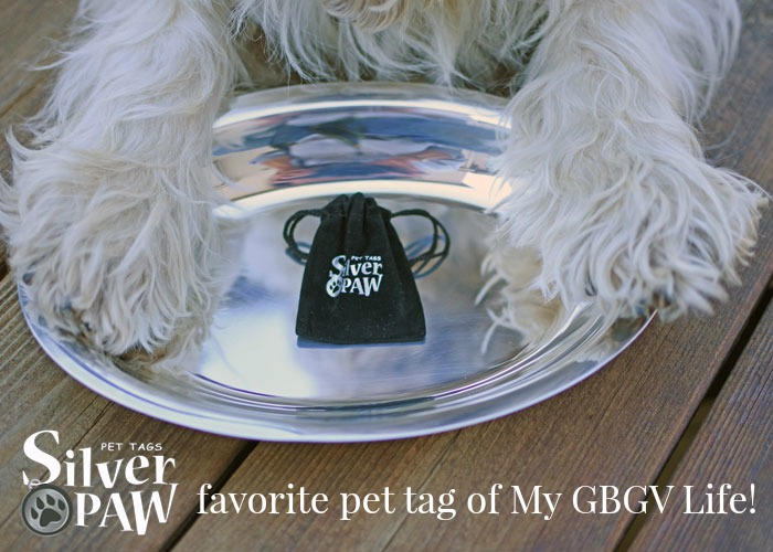 Madison Gets Her Own Stylish Pet Tag