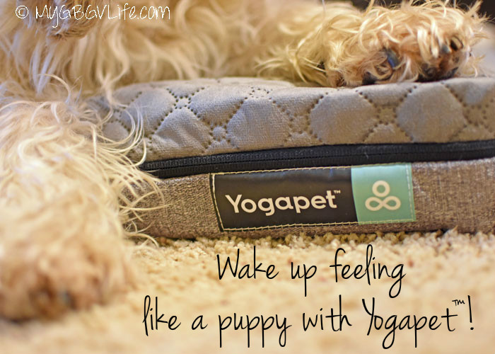 Wake Up Feeling Like A Puppy With A Yogapet Memory Foam Yogabed!