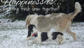 Happiness Is Exploring Fresh Snow Together