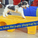 Madison Takes Her First Puppy Playgroup By Storm!