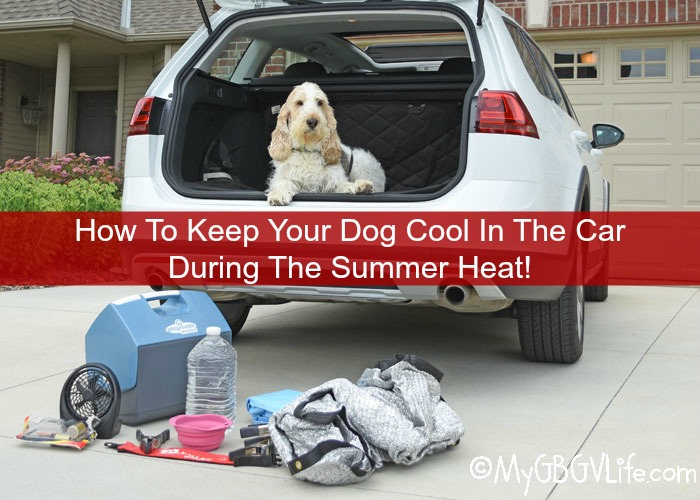 How To Keep Your Dog Cool In The Car During The Summer ...