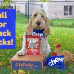 """Will Your Dog """"Fall"""" For Snack Sticks? #ChewyInfluencer"""