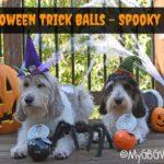 Halloween Trick Balls Provide Spooky Canine Fun!