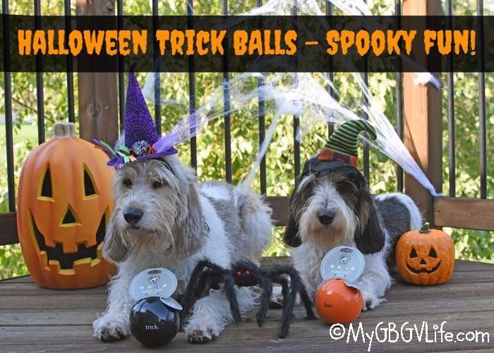 My GBGV Life Halloween Trick Balls Provide Spooky Canine Fun!