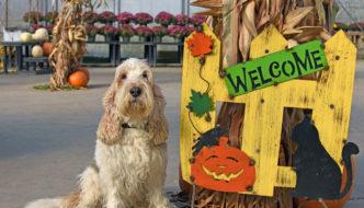 Welcome To Halloween Season!