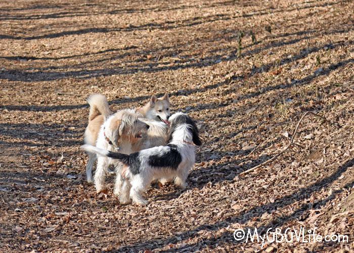 My GBGV Life Discovering Dog Park Fun At Bryant Lake