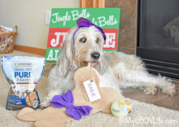 My GBGV Life Fill Your Dog's Stocking With Canidae® This Year!